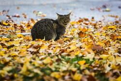 Autumn beauties in Qom