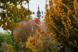 جلوه های پاییز در روز بارانی قم