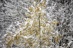 دمای هوا در مناطق سردسیر ایلام به ۶ درجه زیرصفر می رسد