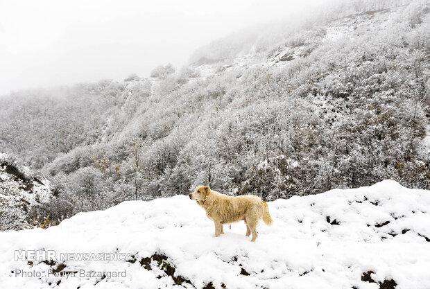 VIDEO: Breathtaking scenery of winter snow in Masuleh