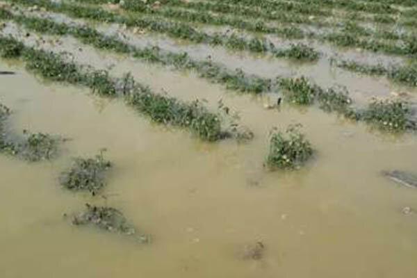 ۱۳۱ میلیارد ریال خسارت سیل به شهرستان خانمیرزا