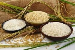 جای خالی برنج رنگی در شالیزارهای مازندران/ معرفی ۲۵ رقم برنج