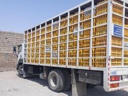 توقیف محمولههای مرغ زنده قاچاق در قزوین