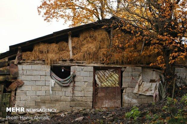 Autumn in Jamshidabad village
