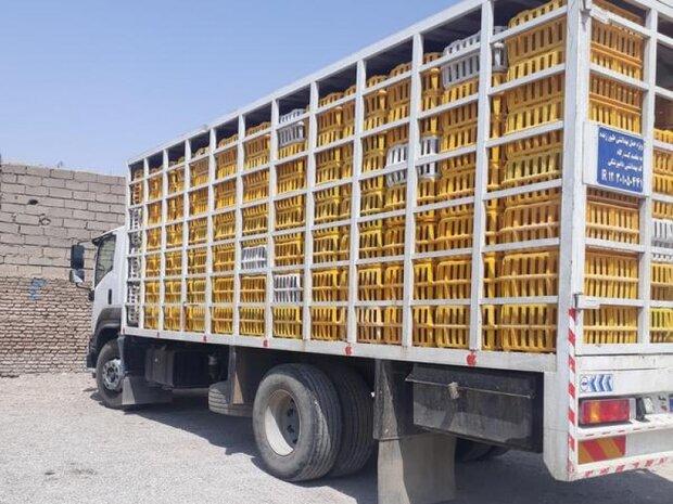 کشف بیش از ۱۱ تن مرغ زنده قاچاق در ایلام