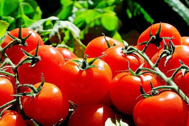 توسعه گلستان با نگاه ویژه به بخش کشاورزی/چتر حمایتی گسترده شود