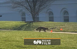 VIDEO: Silver fox spotted at White House