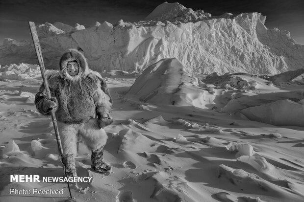 İşte Kuzey Kutbu'nda hayatı kolaylaştıran kızak köpekleri