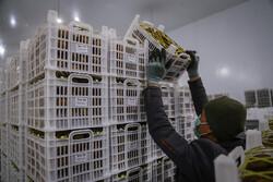 صادرات ۷۴۴ هزار تن کالا از مازندران به ۳۶ کشور جهان