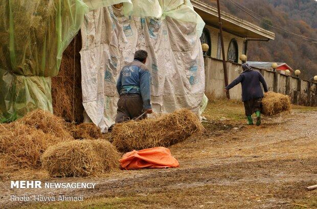 طبیعت پاییزی در روستای کارسالار سوادکوه