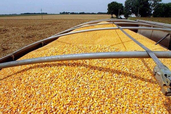 اجرای طرح های دانش بنیان در زمینه خوراک دام/ کودهای زیستی می توانند جایگزین کودهای شیمیایی شوند