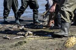 صید ۷۴۰ تن ماهی استخوانی در گیلان/ صید ۳۶ درصد کاهش یافته است