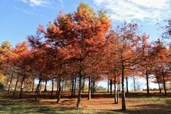 Beautiful sceneries of late autumn in Savadkuh