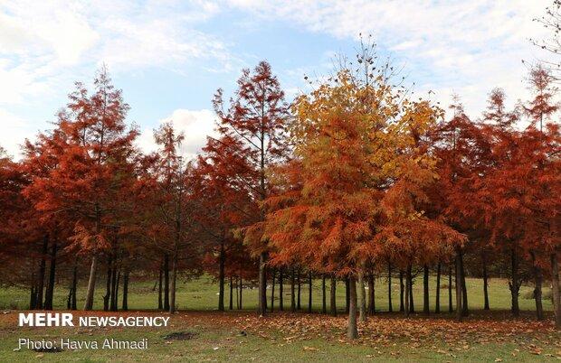 Mazenderan eyaleti sonbahara renk cümbüşü ile veda ediyor