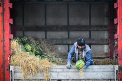 سایه سنگین گرانی بر بازار کم رونق میوه در شب یلدا