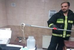 جولان مار سمی ۲ متری در فروشگاه گلستان/آتشنشان ها وارد عمل شدند