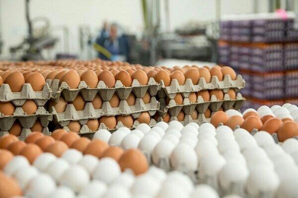 عرضه تخممرغ بستهبندی به انجمن مربوطه واگذار شد