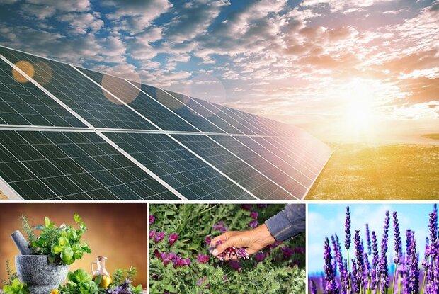 انرژی خورشیدی و گیاهان دارویی ۲ ظرفیت مغفول استان سمنان
