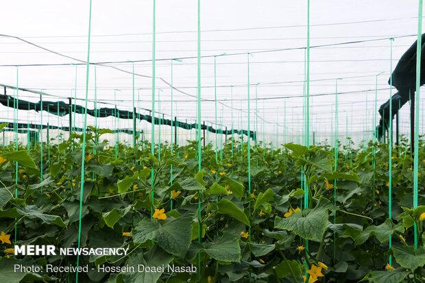 فرصتی برای توسعه کشاورزی در استانهای کم آب فراهم شد