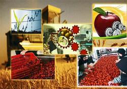 مدیران کشاورزی کشور  شهامت و قدرت اجرای الگوی کشت را ندارند