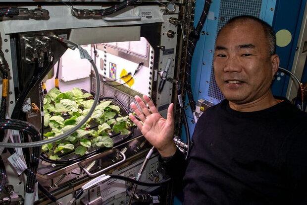 فضانوردان تربچه فضایی می خورند!