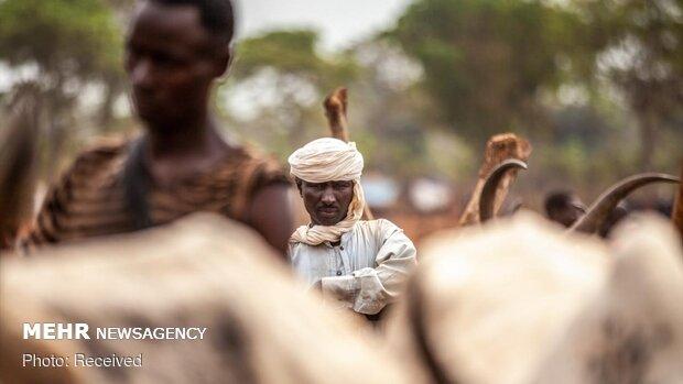 چوپانان قبیله فولانی