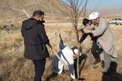 کاشت درخت به یاد شهدای طلبه و رسانه استان مرکزی