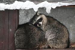 حیوانات باغ وحش مسکو در فصل زمستان