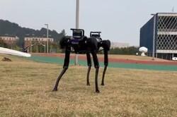 سگ رباتیک بعد از زمین خوردن بلند می شود