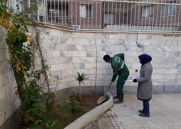 توزیع ۷ هزار نهال مثمر رایگان در محلههای مرکزی شهر تهران آغاز شد