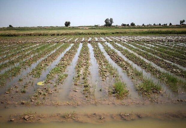 خسارت ۹۶ میلیاردی سیلاب به بخش کشاورزی شهرستان کرمان