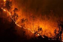 سالانه ۳۳ هزار نفر در آتش سوزی جنگل های جهان می میرند