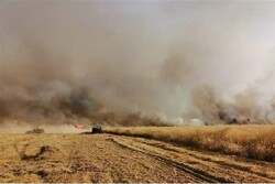 US occupation continues to loot Syrian grain