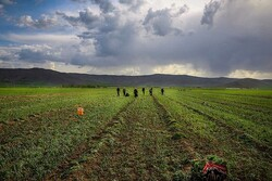 FAO empowers Iranian farmers to improve water productivity