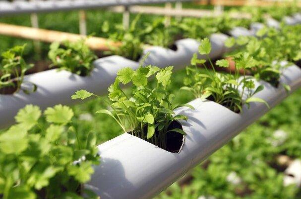 تحقق ۹۴ درصدی احداث گلخانهها و محیطهای کنترل شده
