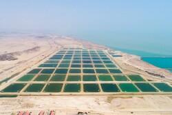 تصویب طرح جهش تولیدات شیلاتی و توسعه آبزی پروری در هرمزگان