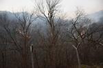 ادامه آتش سوزی در جنگلهای نوار مرزی آذربایجان و ایران