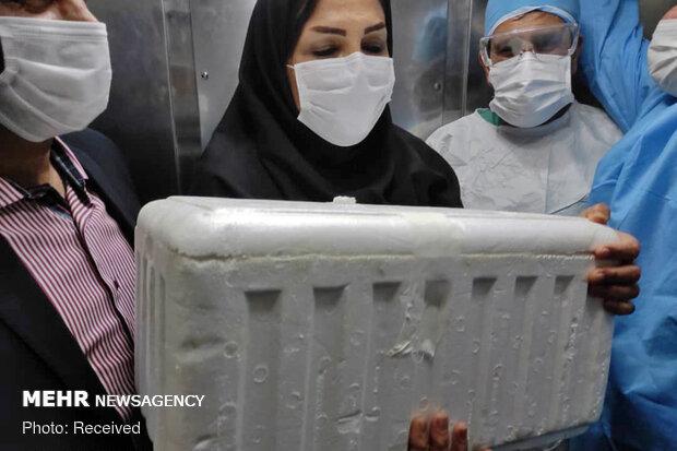 نجاح أول عملية زراعة قلب في خوزستان