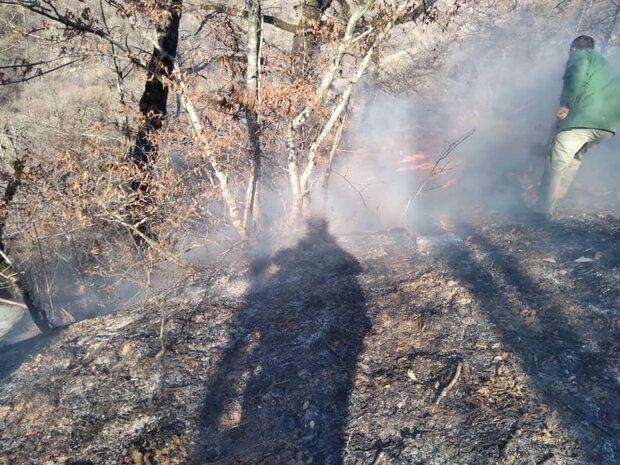 مهار آتشسوزی در ۵۰ هکتار از اراضی پارک ملی دز
