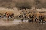 هوش مصنوعی حیات وحش در معرض انقراض را کشف میکند