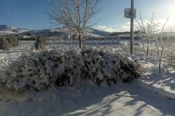بارش برف در شهرهای لرستان/ راه ارتباطی ۱۹۰ روستای الیگودرز بسته است