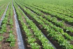 انتقاد از سیاستهای حمایتی دولت از کشاورزان/هشدار درباره فروش زمینهای کشاورزی