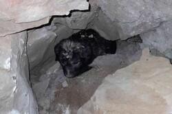 ۲ توله سگ از درون دیوار مجموعه ورزشی اهواز نجات یافتند