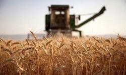 اعطای مشوق ۱۰۰۰ تومانی برای خرید گندم به کشاورزان صدقه پروری است