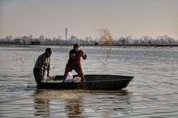 غذا دادن به قوهای مهاجر در  سرخرود