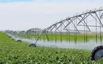 کشت محصولات زراعی در چهارمحال و بختیاری بر اساس میزان بارندگی هر منطقه انجام شود