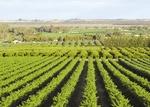 وزير الزراعة العراقي يرحّب بالاستثمارات الايرانية في القطاع الزراعي العراقي