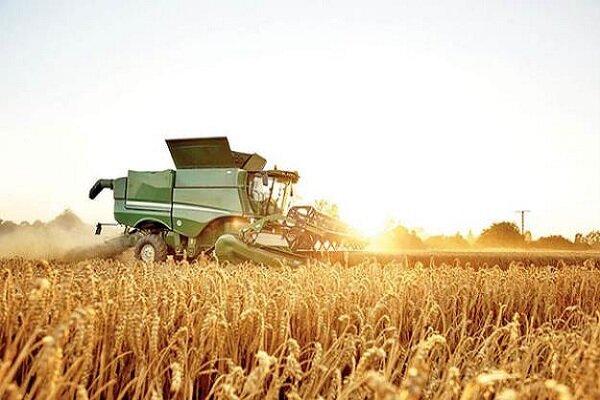 تولید گندم در بوشهر کاهش مییابد/ آمادگی برای مقابله با ملخها