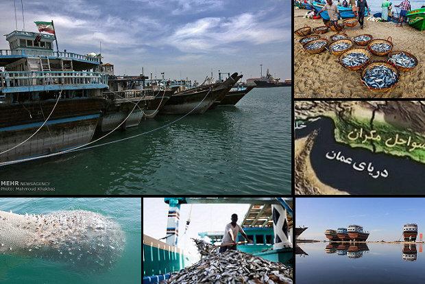 بکارگیری زیرساخت های ریلی برای صادرات آبزیان در سال جاری