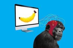 میمونها اجرای بازیهای ویدئویی را یاد گرفتند!
